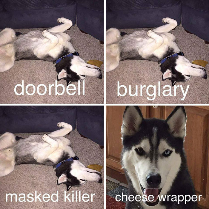 Anyone Else Have A Dog Like This?