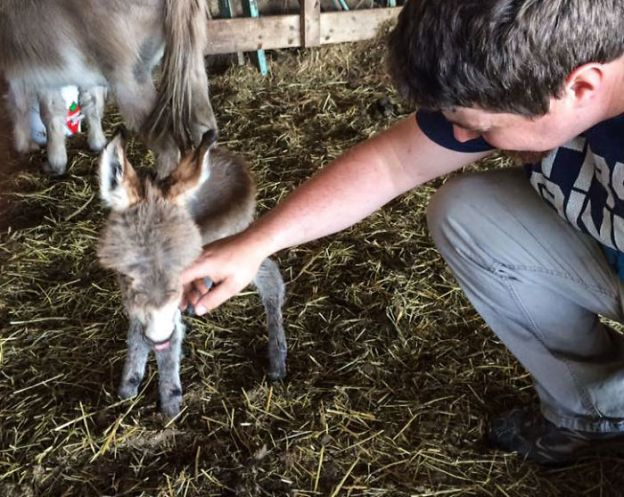 cute-miniature-baby-donkeys3-5aa94714eae88__700 These 25+ Cute Baby Donkeys Are Everything You Need To See Today Design Random