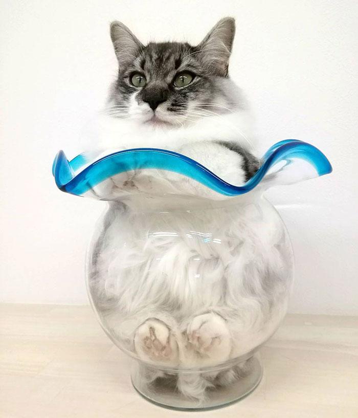 Another Liquid Cat
