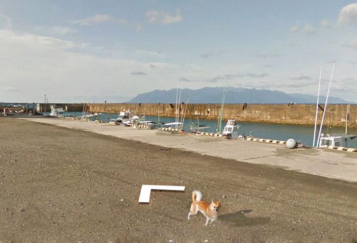 tiny-dog-follows-street-view-car-kagoshima-japan011