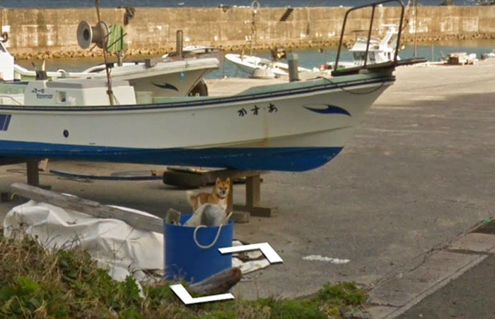 tiny-dog-follows-street-view-car-kagoshima-japan013