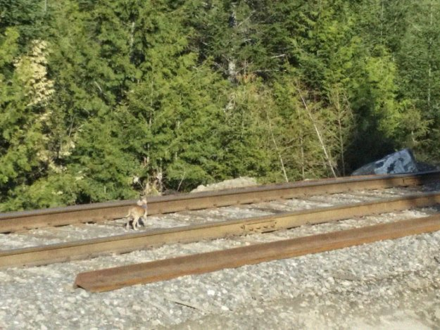 blind-dog-rescue-railroad-tracks-bobisacat-1-5b0277dd4dbcc__700 Woman Stops Her Car To Investigate Something 'Wrong' She Sees On Railroad, Becomes A Hero Design Random