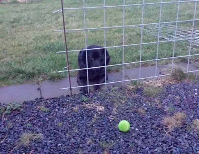 He vuelto a home y me he hallado al perro aguardando así