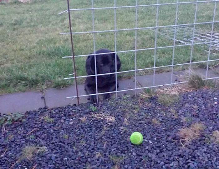 Vino a casa y encontró mi Perro esperando así
