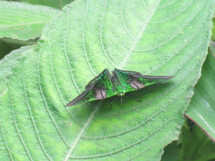 Beautiful Green Butterfly!