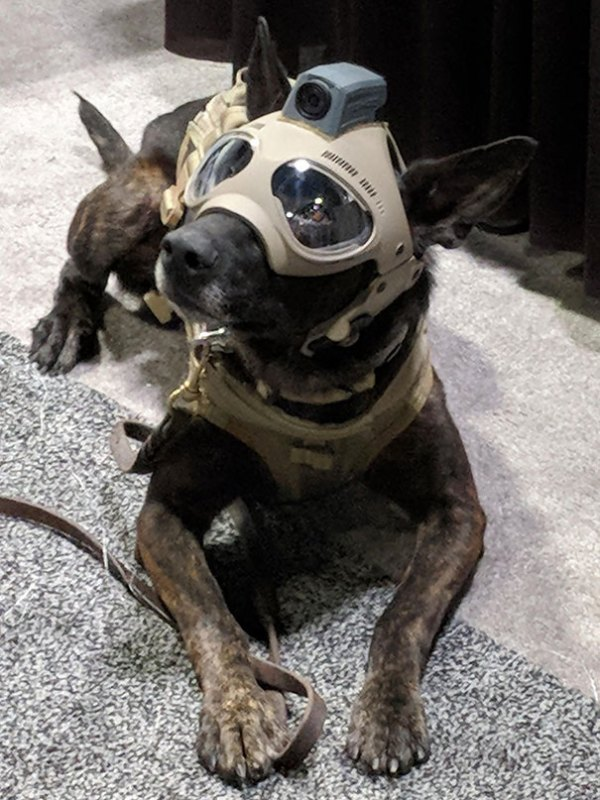 Tactical Dog Helmets. The Future Is Now