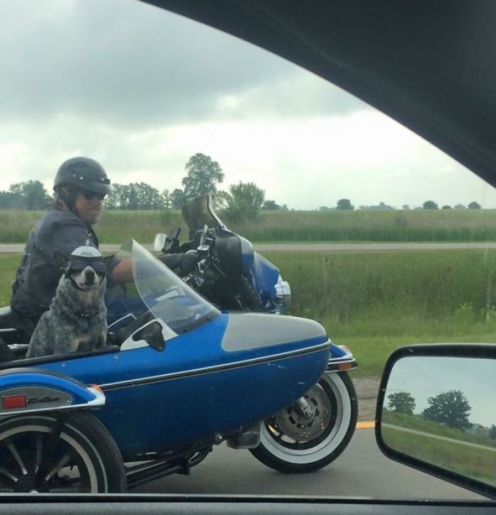 """Saw This Fella On The Highway. The Sticker On His Helmet Says """"Bad To The Bone"""""""