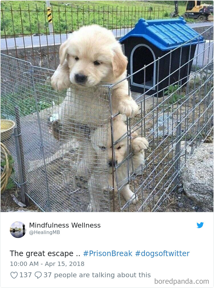 Hilarious-Dog-Tweets