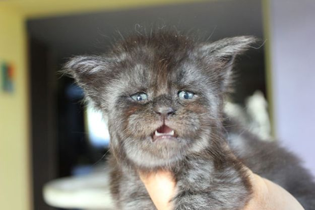 Cat-becomes-popular-on-the-internet-for-resembling-a-human-5b435020e4de5__700 This Cat With A Human-Like Face Is Going Viral, And We Can't Unsee It Design Random