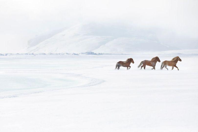 animal photography icelandic horses in the realm of legends drew doggett 1 5b5afbce48b15  880 - Encantadora série de fotografias de Drew Doggett e os cavalos islandeses