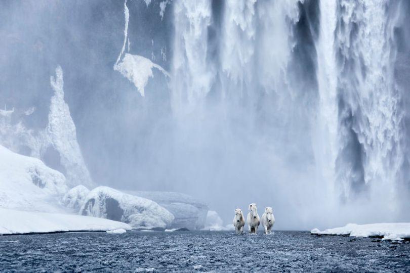 animal photography icelandic horses in the realm of legends drew doggett 10 5b5afbe10cc99  880 - Encantadora série de fotografias de Drew Doggett e os cavalos islandeses