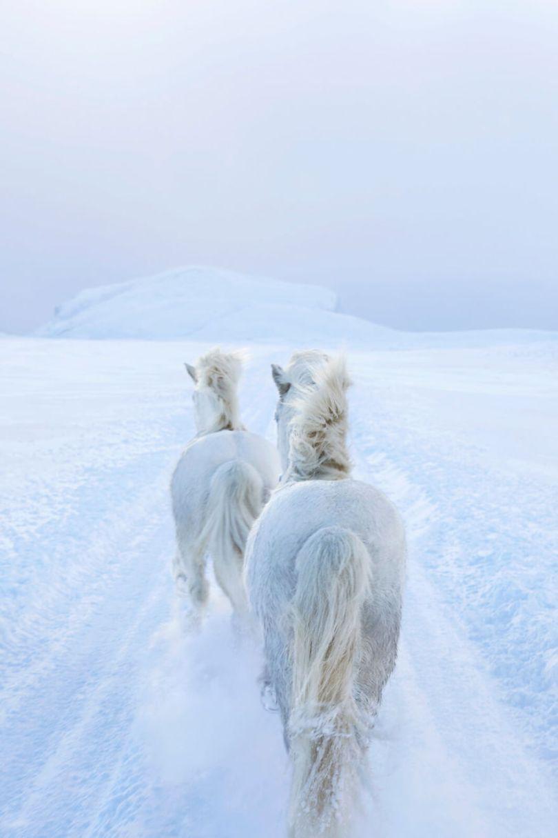 animal photography icelandic horses in the realm of legends drew doggett 36 5b5afc178ef4d  880 - Encantadora série de fotografias de Drew Doggett e os cavalos islandeses