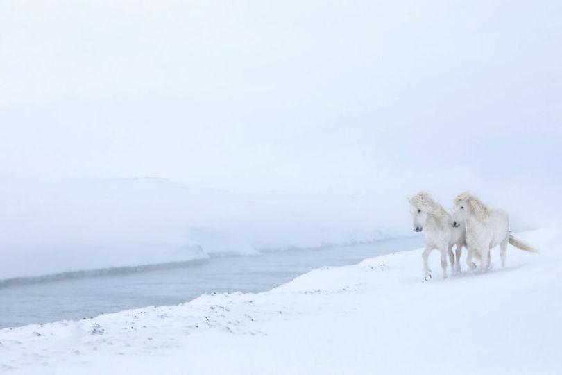 animal photography icelandic horses in the realm of legends drew doggett 4 5b5afbd45e718  880 - Encantadora série de fotografias de Drew Doggett e os cavalos islandeses