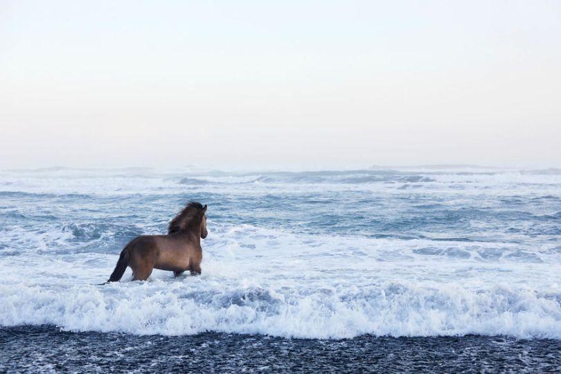 animal photography icelandic horses in the realm of legends drew doggett 6 5b5afbd852aa8  880 - Encantadora série de fotografias de Drew Doggett e os cavalos islandeses