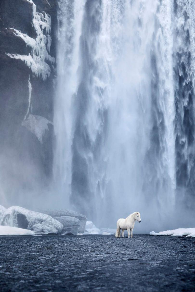 animal photography icelandic horses in the realm of legends drew doggett 8 5b5afbdc86a27  880 - Encantadora série de fotografias de Drew Doggett e os cavalos islandeses