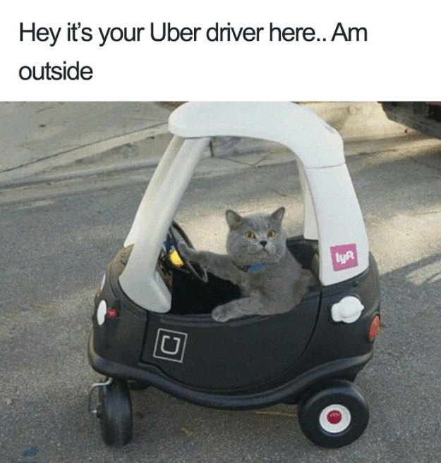 animals-using-uber-memes-12-5b4310f0733b4__700 15+ Of The Funniest Uber Memes With Animals Design Random