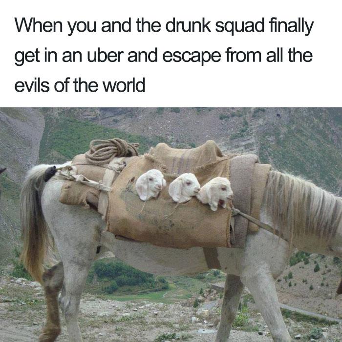 animals-using-uber-memes-2-5b4310dec702b__700 15+ Of The Funniest Uber Memes With Animals Design Random