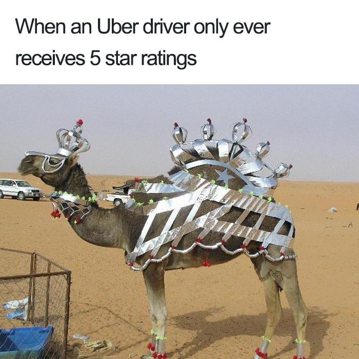 animals-using-uber-memes-5-5b4310e36c5dd__700 15+ Of The Funniest Uber Memes With Animals Design Random
