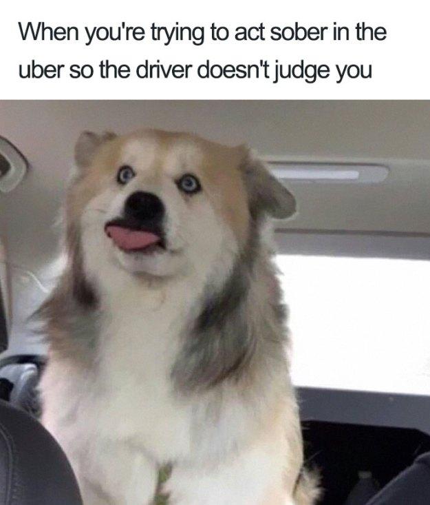 animals-using-uber-memes-8-5b4310e83ef28__700 15+ Of The Funniest Uber Memes With Animals Design Random