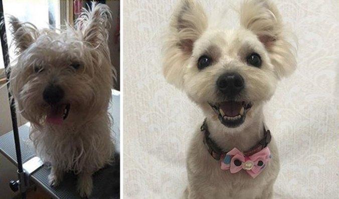 dog-grooming-transformations-yoriko-hamachiyo-japan-19_taisytas