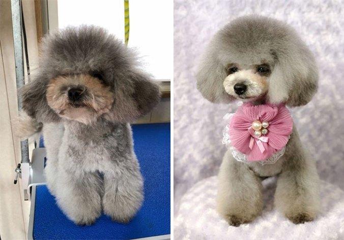 dog-grooming-transformations-yoriko-hamachiyo-japan-20_taisytas