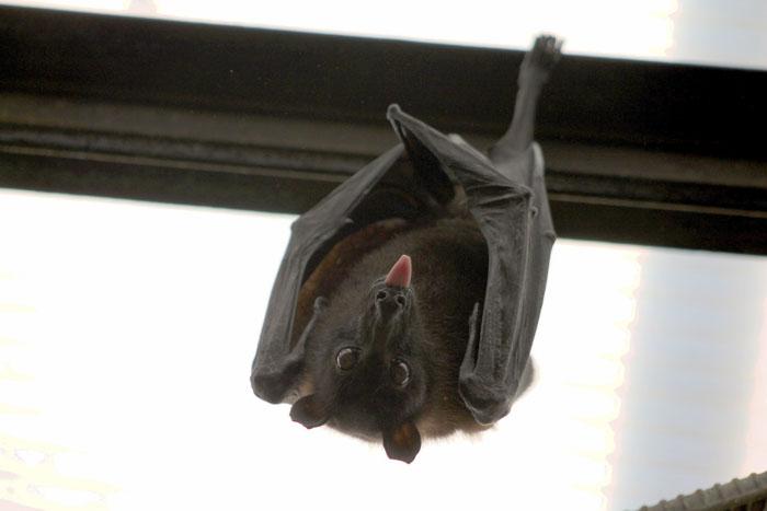Población de murciélagos