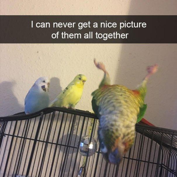 zvierata, vtipne, momenty, zvierat, vtaci, papagage, snapchat