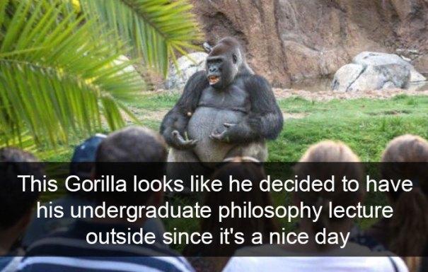 zvierata, vtipne, momenty, zvierat, snapchat, gorila, prednaska, škola
