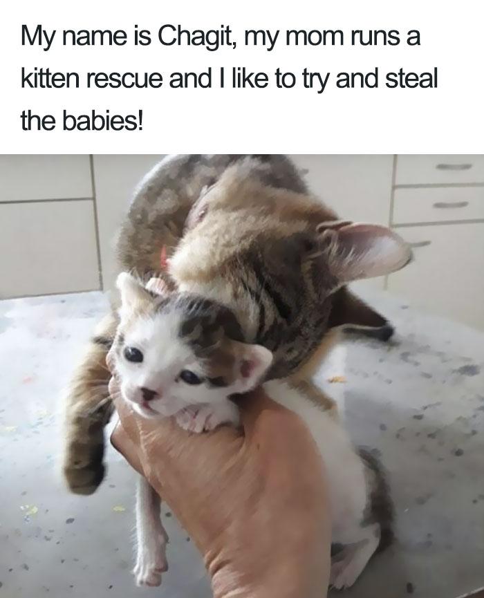Funny-Cat-Shaming [19659003] fuente </p data-recalc-dims=