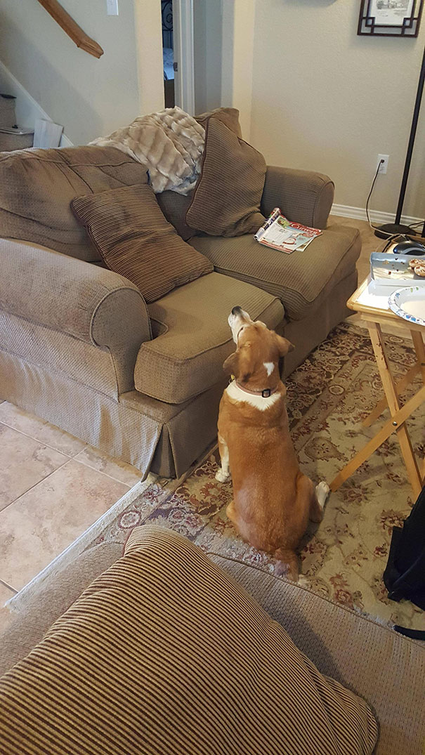 When Your Blind Dog Begs For Food
