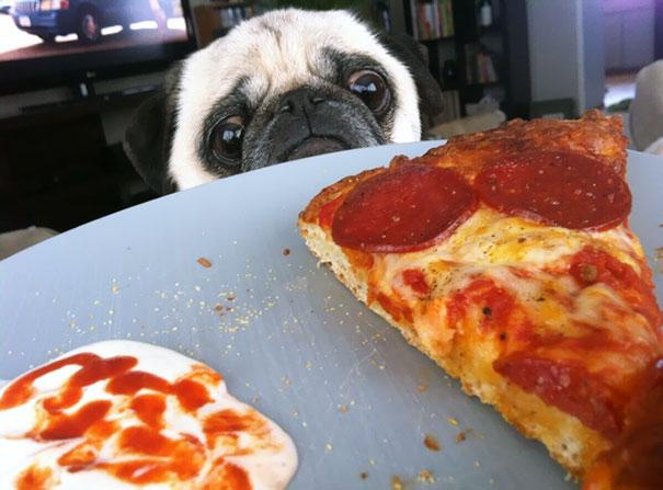 Pizza Please?