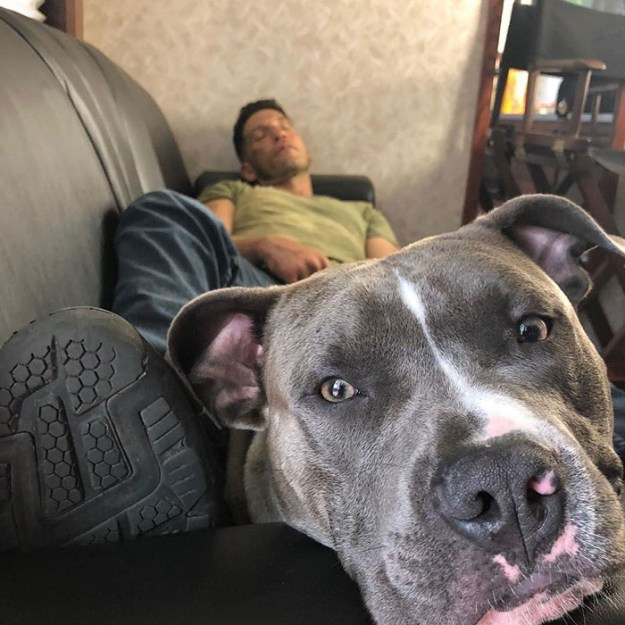 pitbull-lover-jon-bernthal-3-5b588e16ebe7d__700 Heartwarming Photos Of 'The Walking Dead' Star With His 3 Rescue Pit Bulls Will Melt Your Heart Design Random