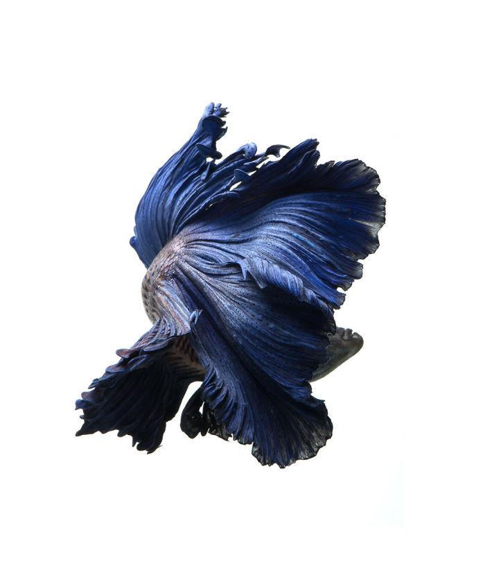 Las poses elegantes y fantásticas de peces de acuario capturadas por un fotógrafo tailandés