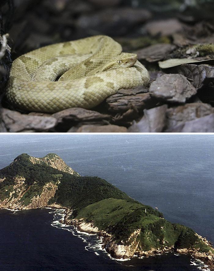 Isla Da Queimada Grande (Isla Serpiente), Océano Atlántico
