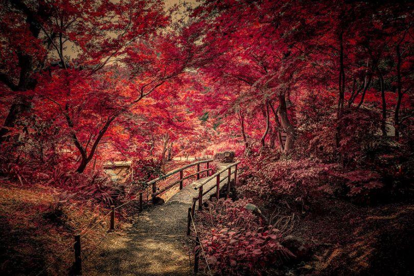 After 20 Years I finally got to do a child dream and photograph Japans Beauty 5b9ab2d1f23ad  880 - Fotos do Japão como você nunca viu