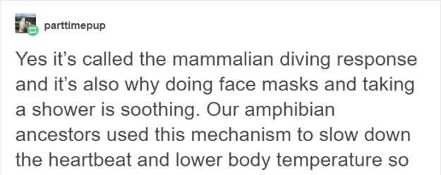 water-on-face-mammalian-diving-response-calming-peaceful-2 Someone Explains Why Water Feels Peaceful, And There's Actually A Scientific Reason Behind It Design Random