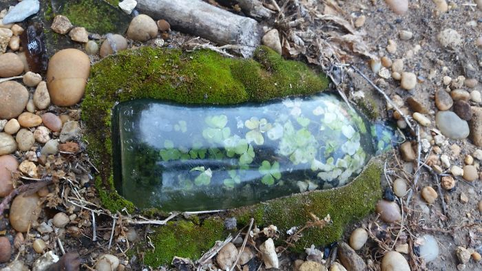 Una pequeña mancha de trébol en una botella