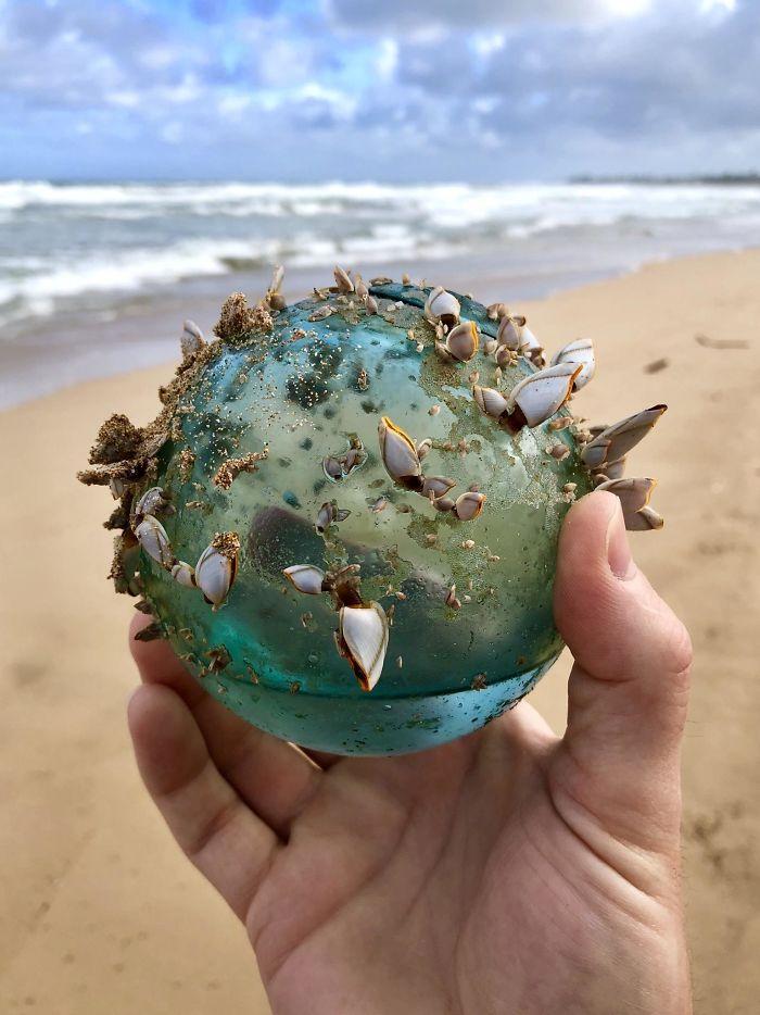 Mientras caminaba por la playa en Hawai Mi esposa y yo encontramos Esta bola de cristal que se había convertido en el hogar de un pequeño ecosistema marino