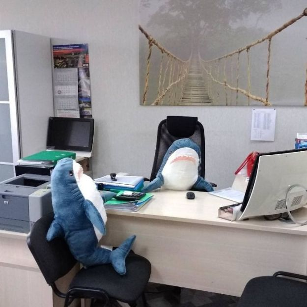 BpPJlrgltSI-png__700 IKEA Released An Adorable Plush Shark And People Are Losing Their Minds Over It Design Random