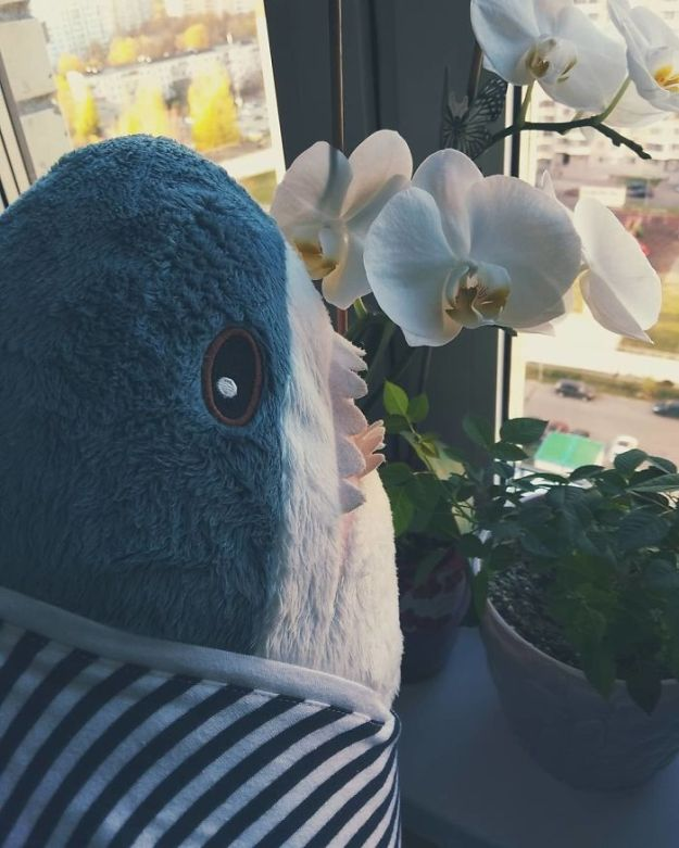 BpPKONlgKNW-png__700 IKEA Released An Adorable Plush Shark And People Are Losing Their Minds Over It Design Random
