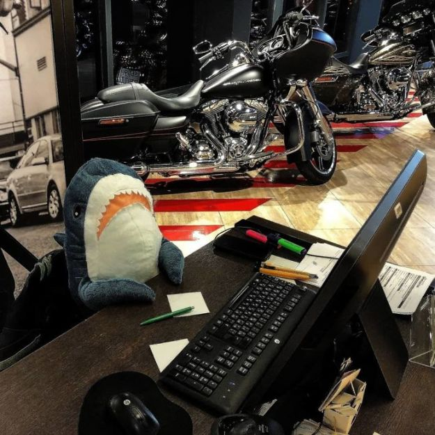 BpWOZa6D75G-png__700 IKEA Released An Adorable Plush Shark And People Are Losing Their Minds Over It Design Random