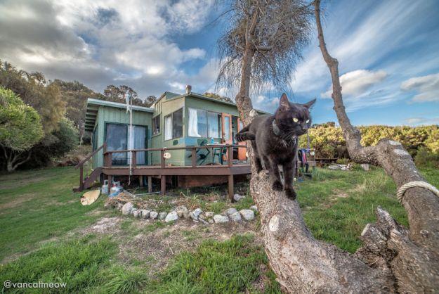 DSC_2347-5bd15af564392__880 I Spent Over 3 Years Traveling With My Cat In A Campervan Design Random Travel