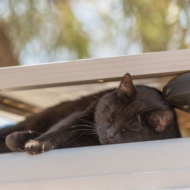 My-cat-road-trips-around-Australia-with-me-after-I-sold-my-house-and-everything-to-travel-3-years-ago-5bd2d17a61870__880 I Spent Over 3 Years Traveling With My Cat In A Campervan Design Random Travel