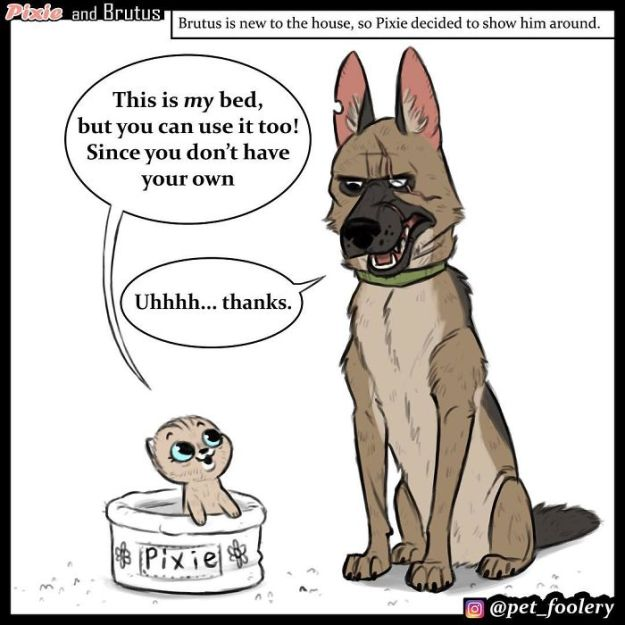 funny-animal-comics-adventures-dogs-pixie-brutus-pet-foolery-13-5bb2048a5c7ce__700 These Hilariously Adorable Comics About Brutus And Pixie Will Instantly Make Your Day Design Random