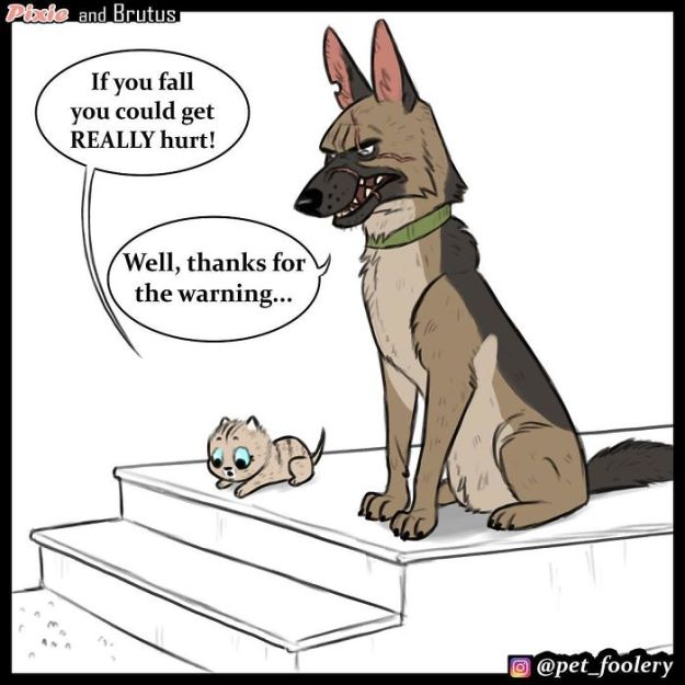 funny-animal-comics-adventures-dogs-pixie-brutus-pet-foolery-15-5bb2048fb603b__700 These Hilariously Adorable Comics About Brutus And Pixie Will Instantly Make Your Day Design Random