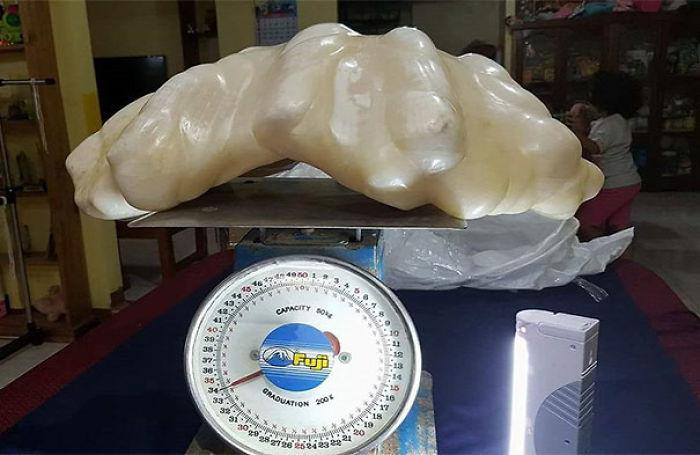 El pescador encontró una perla gigante, que pesaba 34 kg, pero no era consciente de que la perla de $ 100 millones era tan valiosa y la mantuvo como Luck Charm