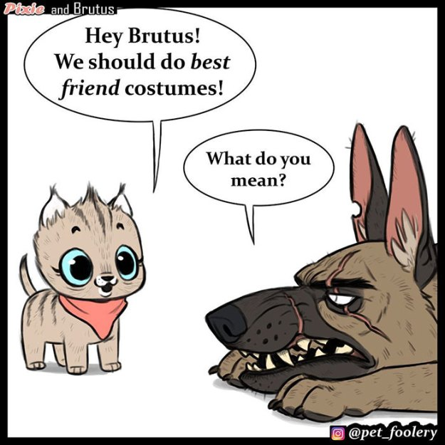 pixie-brutus-comics-best-friend-costumes-pet-foolery-1-5bc4408f45bb3__700 There's A New Halloween Comic About Brutus & Pixie That Will Instantly Make Your Day Design Random
