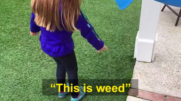 schoolgirl-tells-teacher-father-growing-weed-26 Daughter Tells Her Teachers That Dad Is Growing 'A Ton Of Weed' At Home, And It Escalates Hilariously Design Random