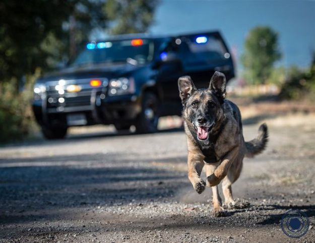 vancouver-police-department-charity-dog-calendar-2019-14-5bd16e2d427eb__700 Vancouver Police Canine Unit Just Released Their 2019 Charity Calendar And It's Badass Design Random
