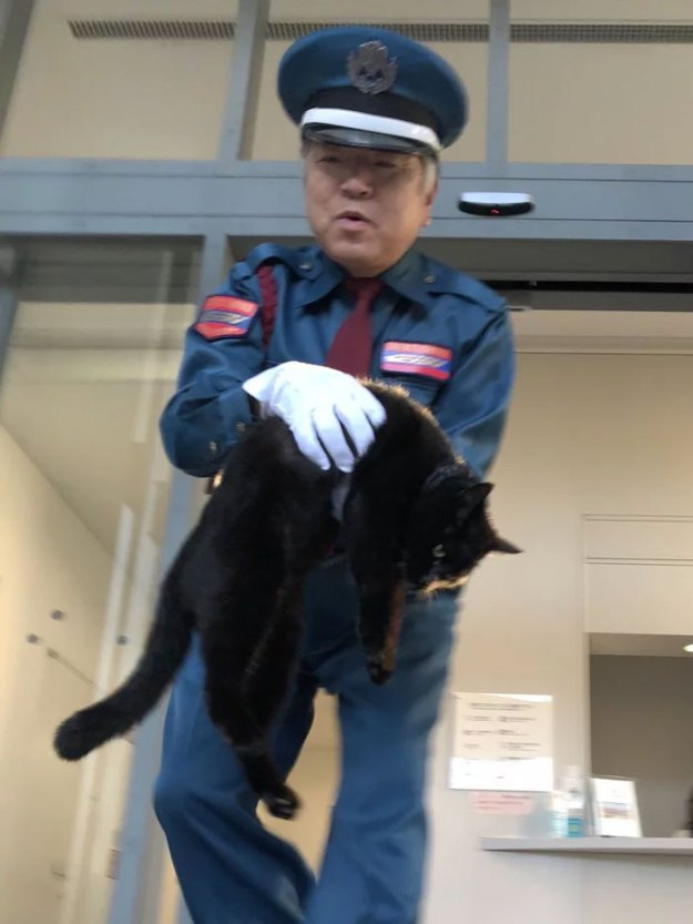 04-5bee74f5a35cb__700 Two Cats In Japan Have Been Trying To Sneak Into A Museum For Years (30 Pics) Design Random